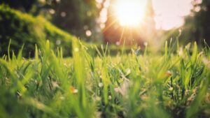 image of lawn in spring